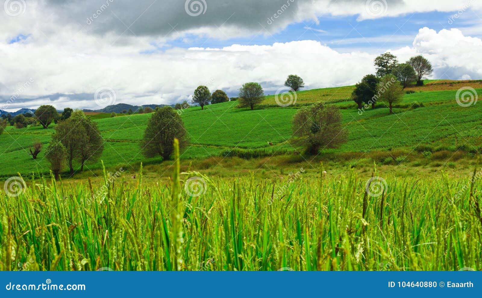 Download Paddy Field En De Groene Heuvel Stock Foto - Afbeelding bestaande uit wolken, landschap: 104640880