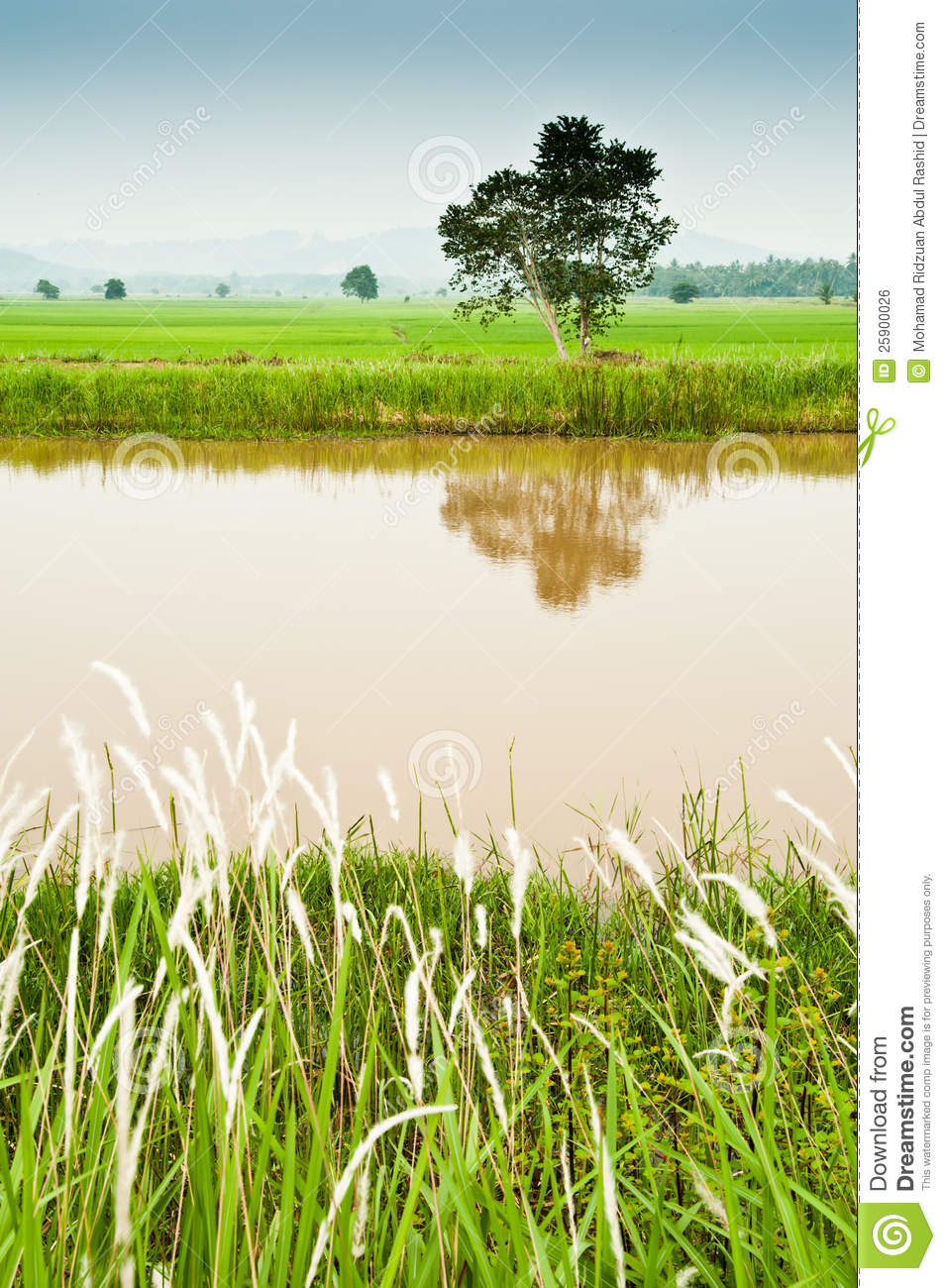 padi field and water canal stock photo image of agronomy 25900026 dreamstime com