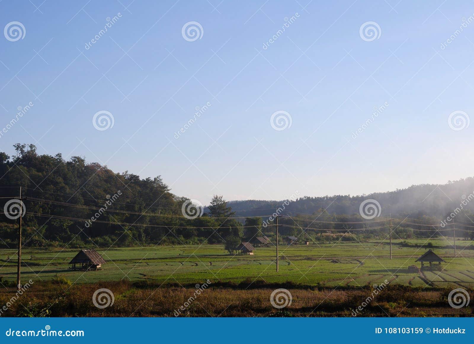 Padieveld en berg in platteland