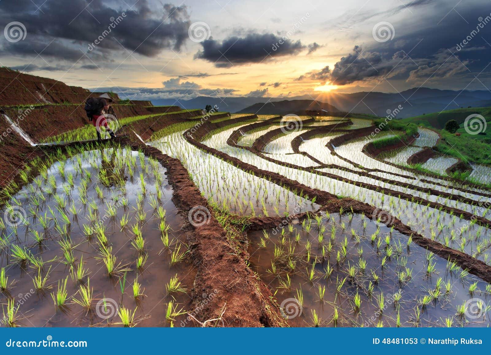 Padievelden op terrasvormig in Chiang Mai, Thailand