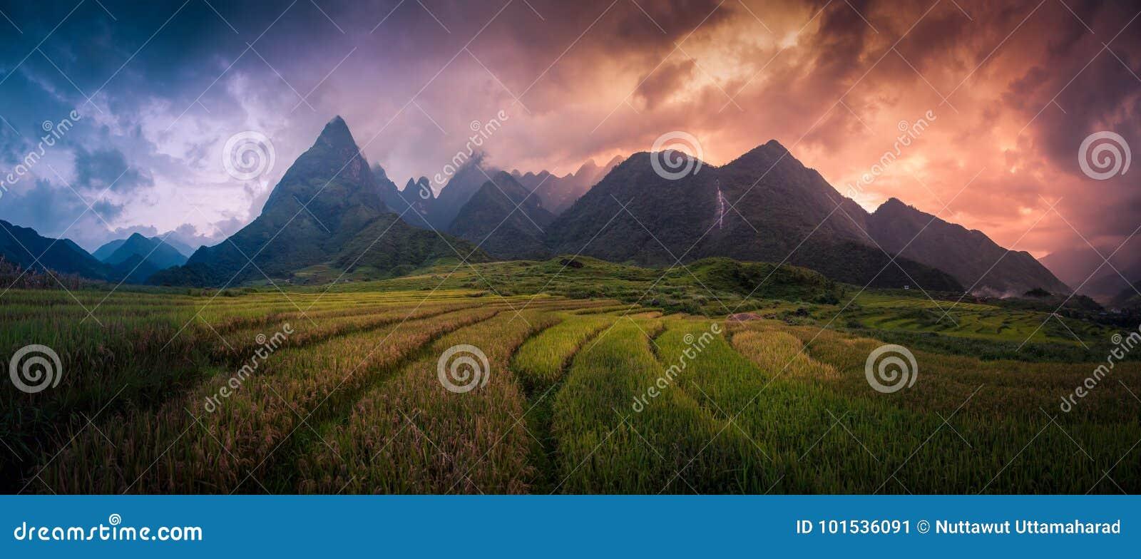 Padievelden op terrasvormig met de achtergrond van Onderstelfansipan bij zonsondergang in Lao Cai, Noordelijk Vietnam Fansipan is