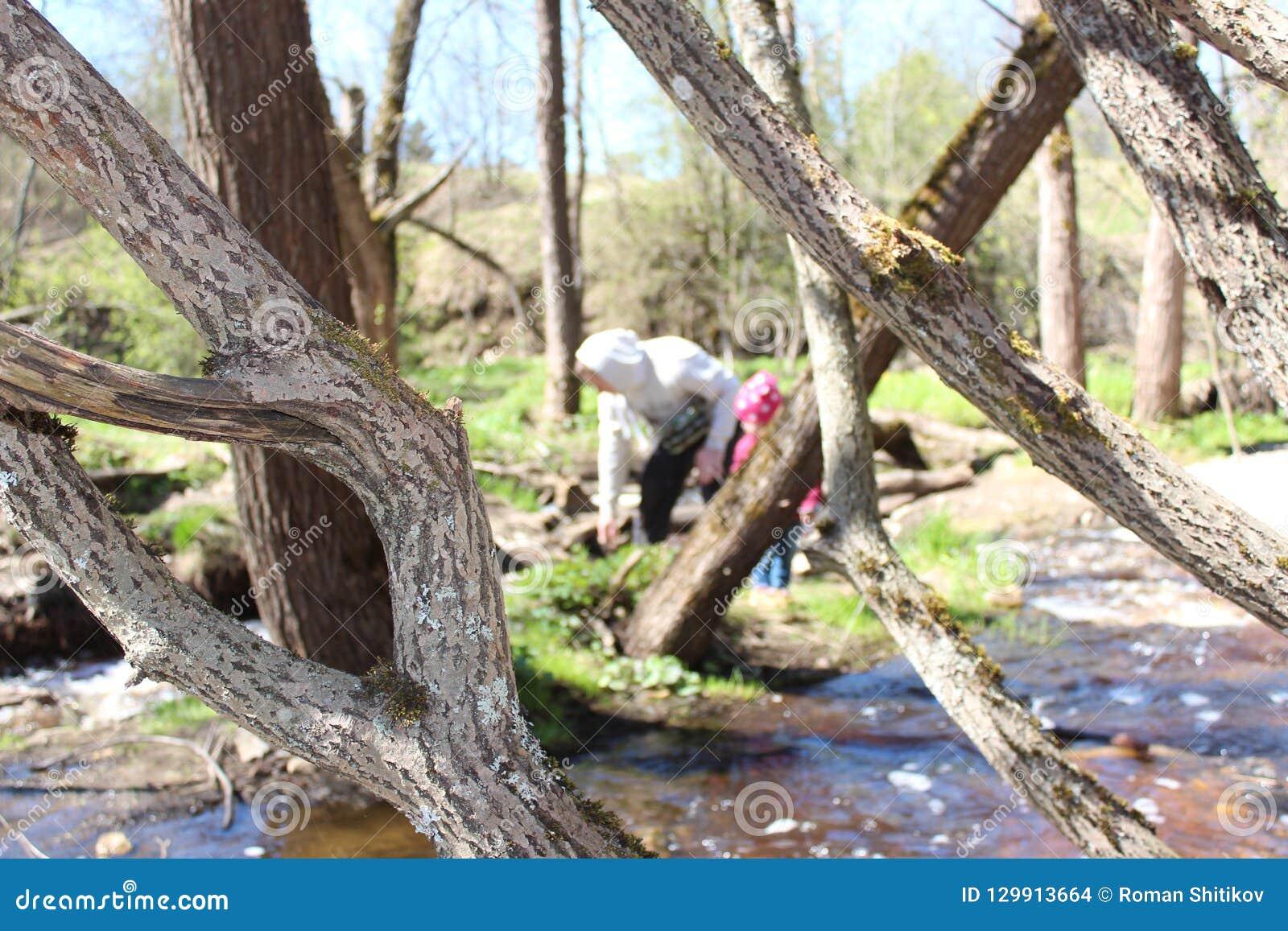 Padre e figlia che camminano vicino al fiume della foresta