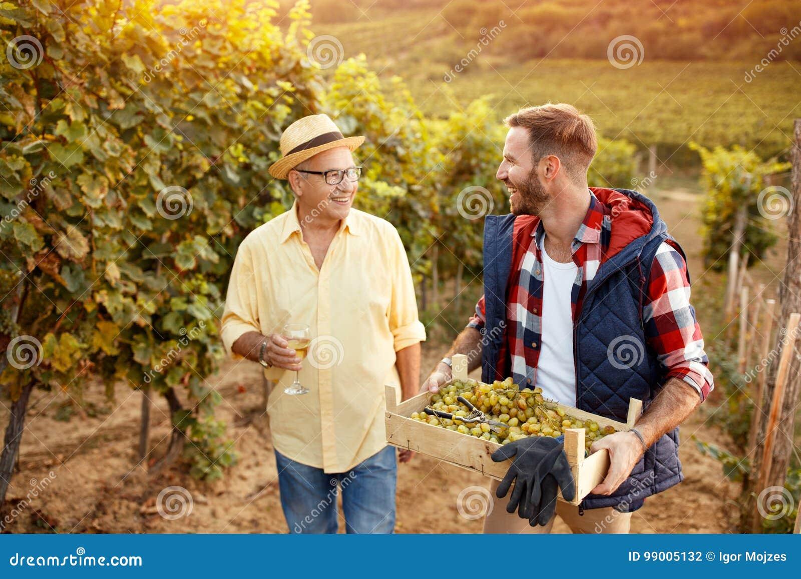 Padre e hijo de la tradición de la familia que cosechan las uvas
