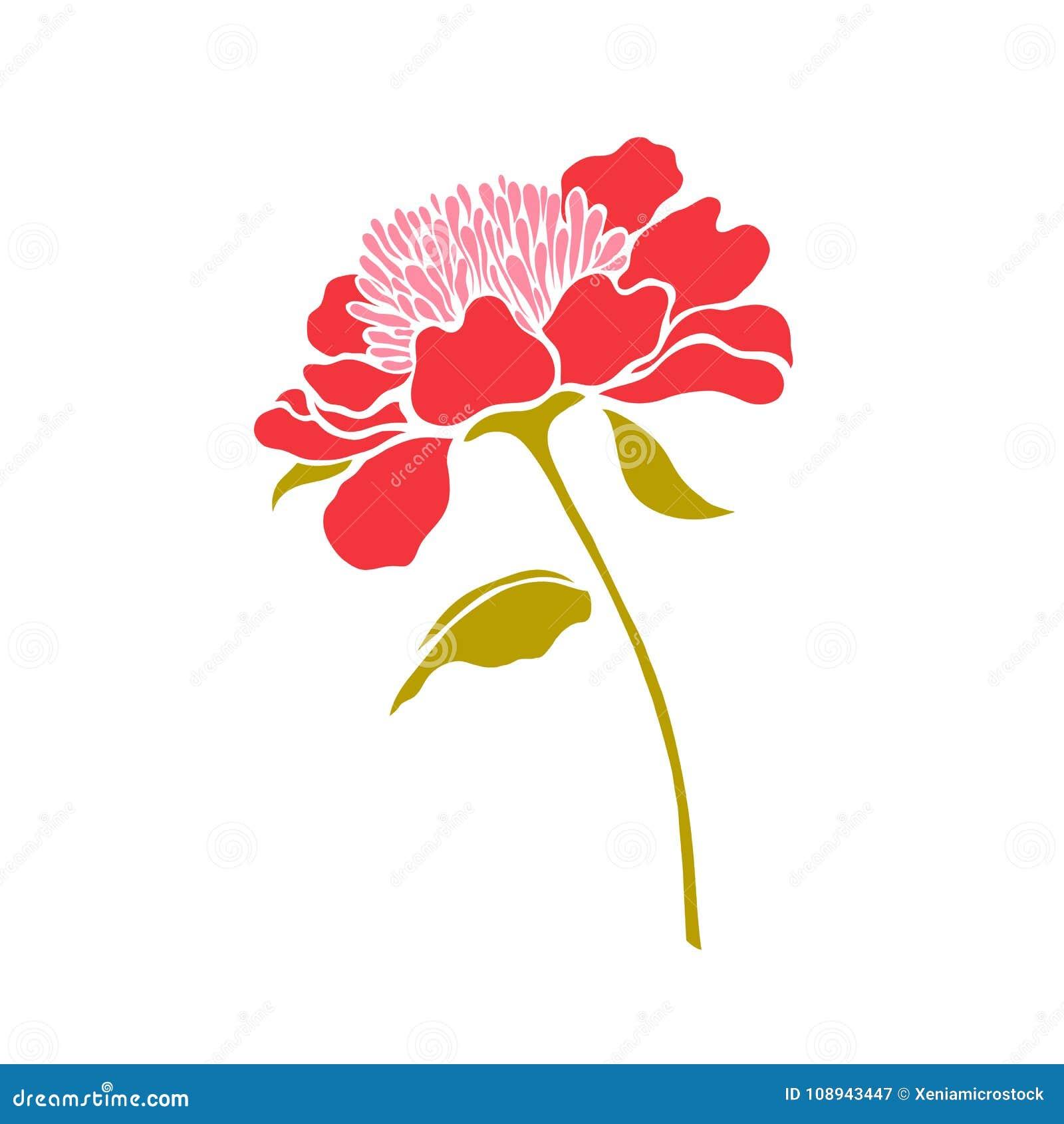 Paeonia Pion Röd blomma i en enkel kopia