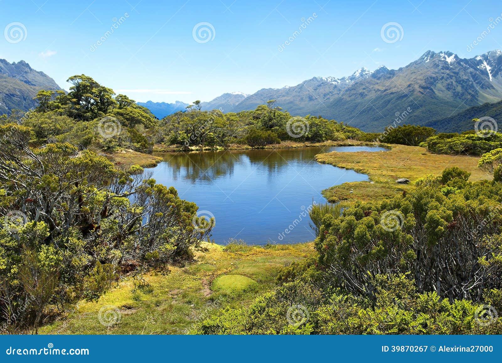 Matrimonio In Nuova Zelanda : Paesaggi magnifici della nuova zelanda immagine stock