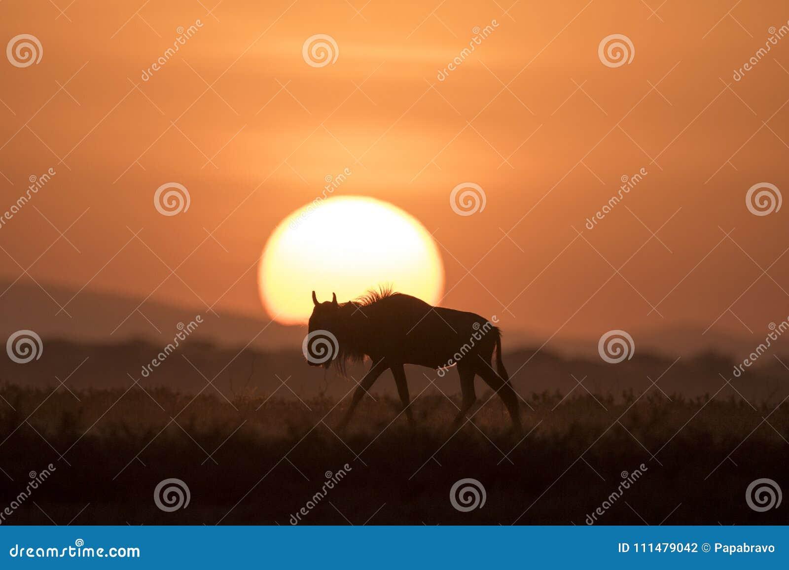 Paesaggio africano mentre nel safari