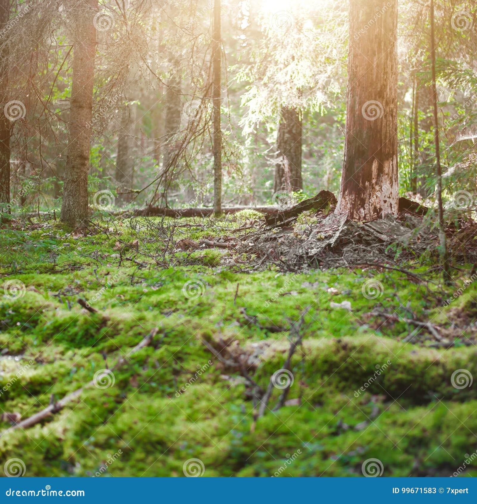 Paesaggio all aperto del fondo di ecologia
