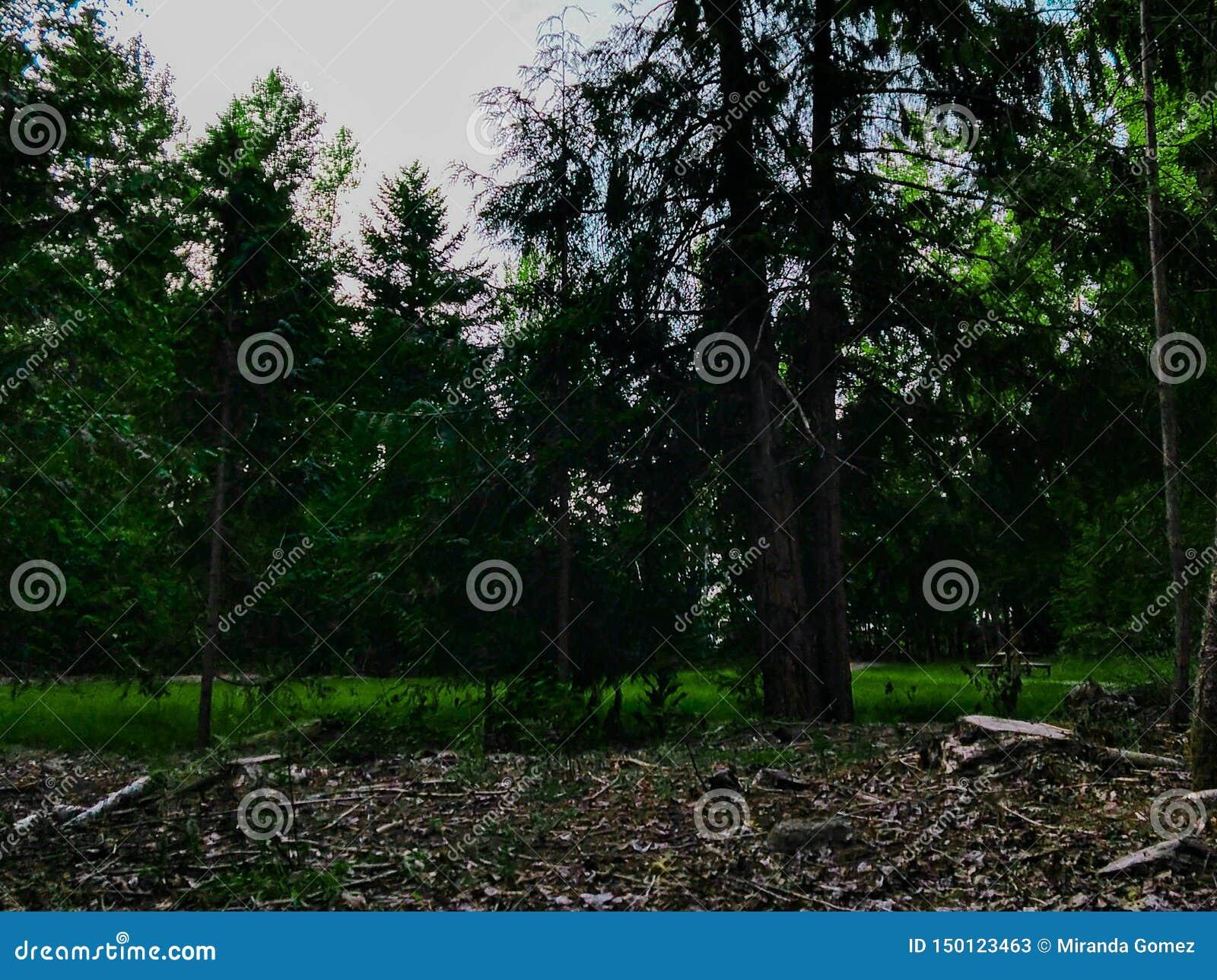 Paesaggio boscoso di nord-ovest pacifico
