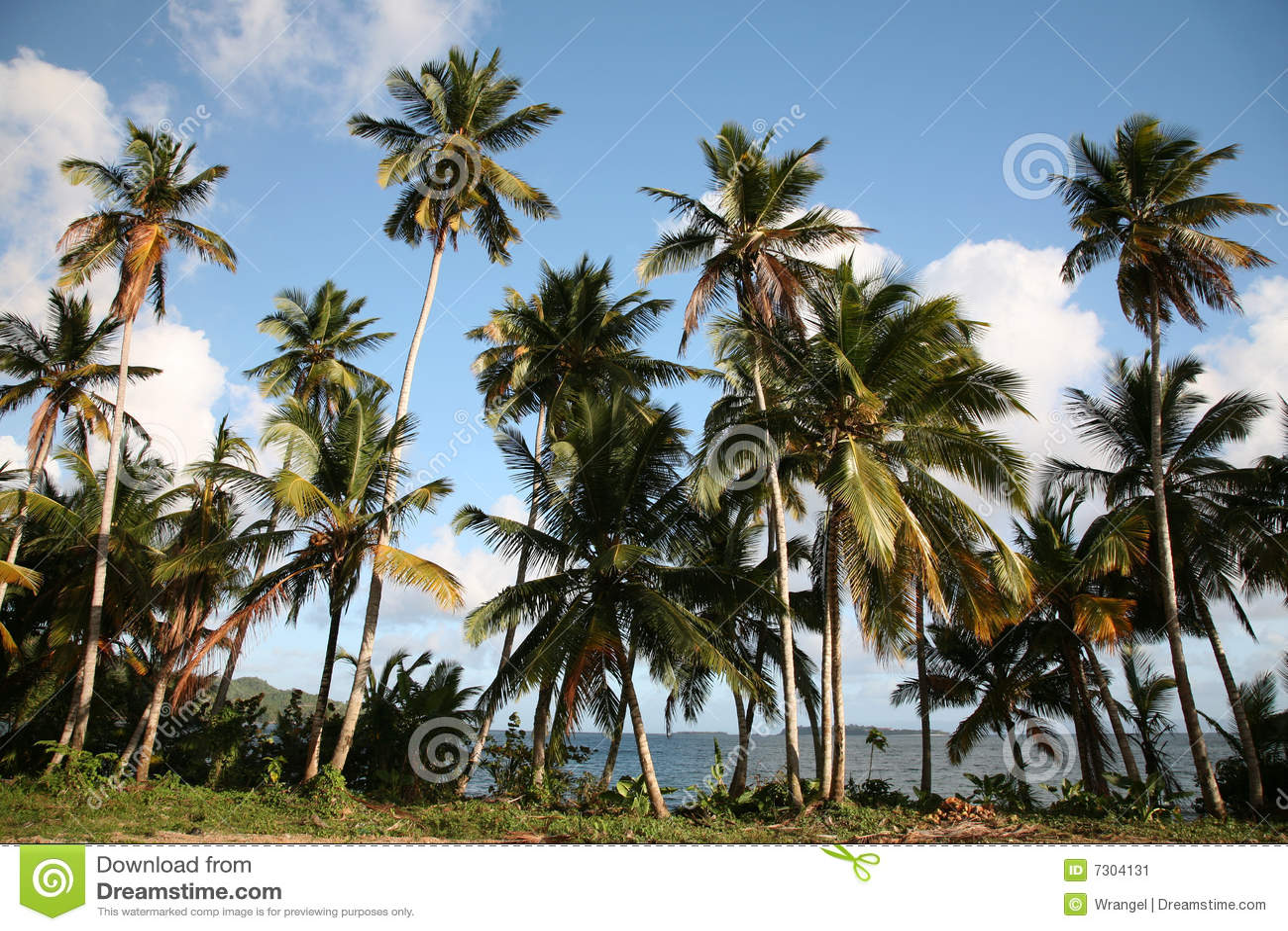 Paesaggio caraibico