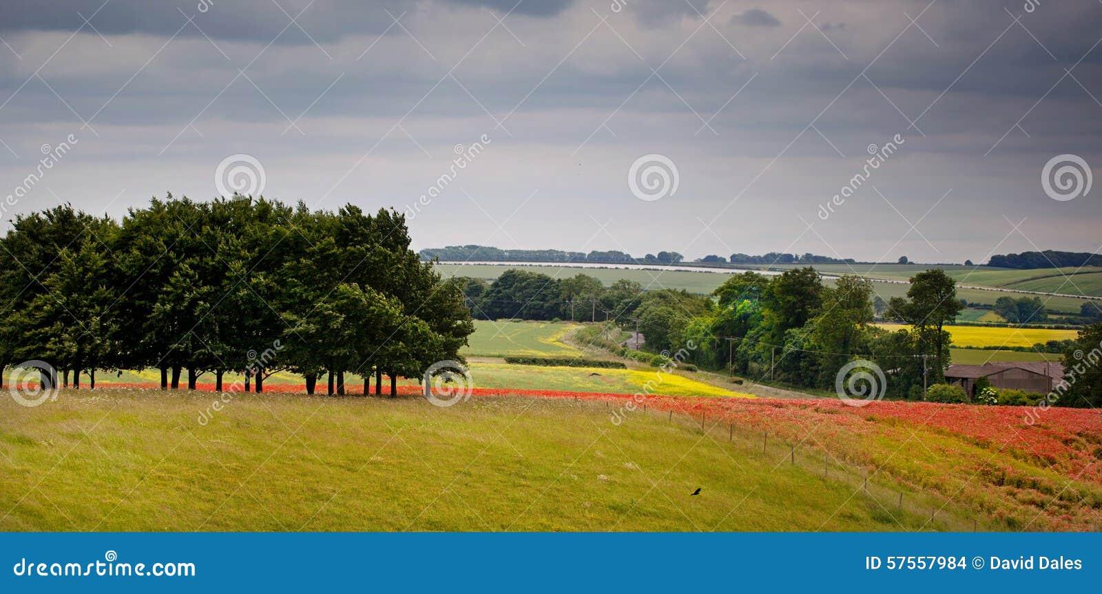 Paesaggio Colourful