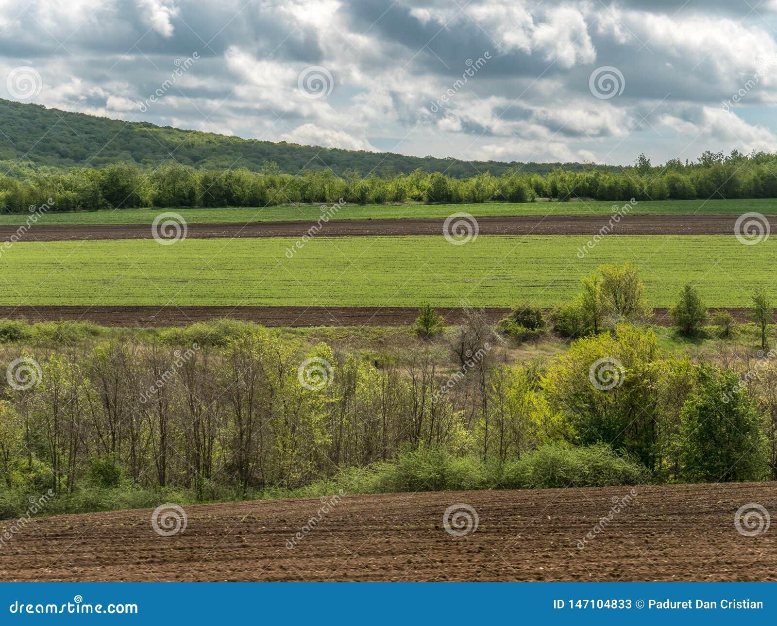 Paesaggio con i campi di agricoltura e le aree verdi su Sunny Day con il cielo nuvoloso