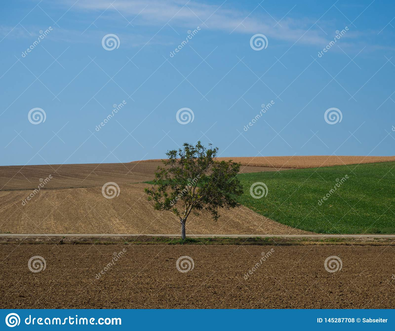 Paesaggio con il singolo albero