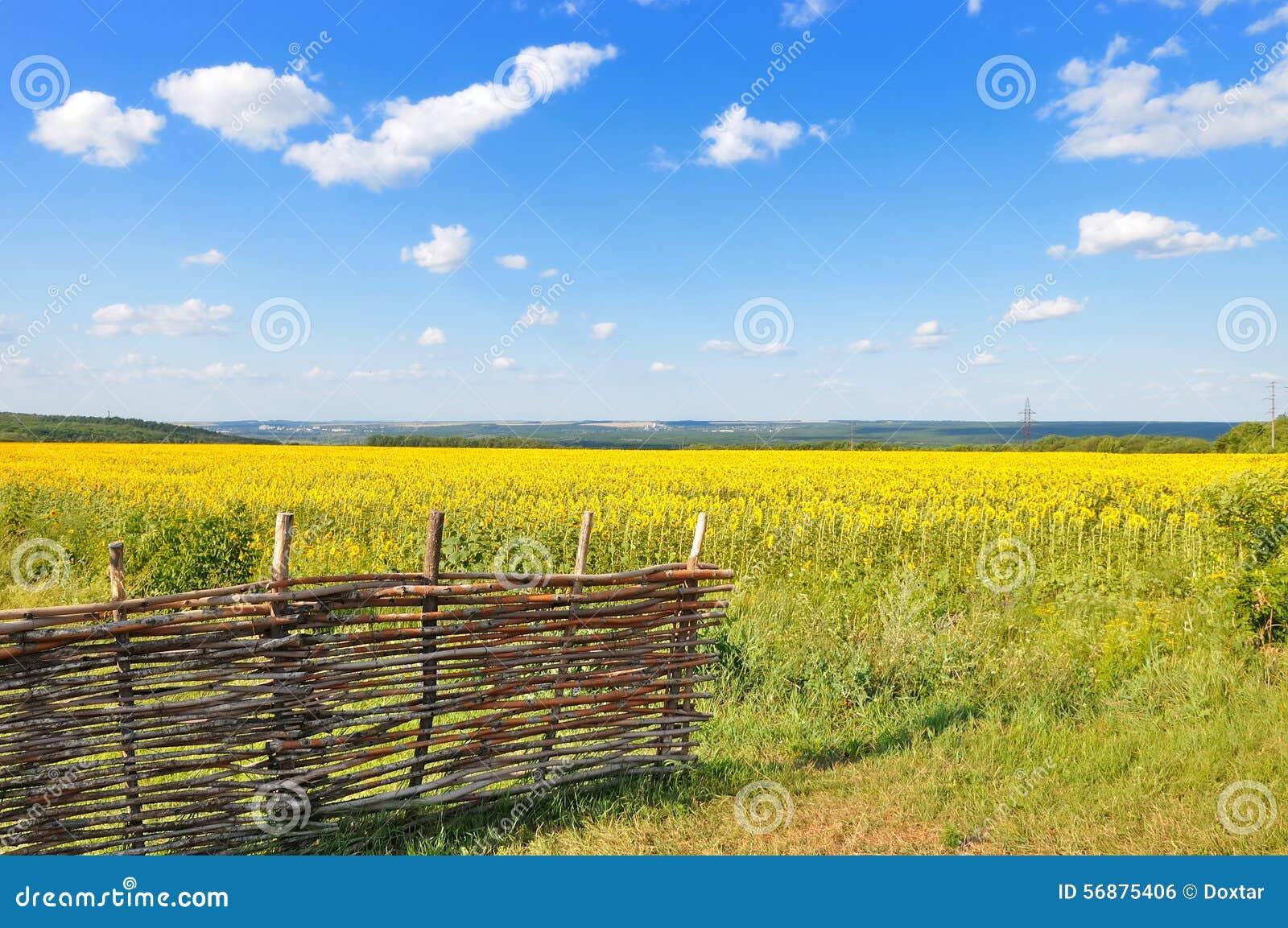 Paesaggio con un campo dei girasoli