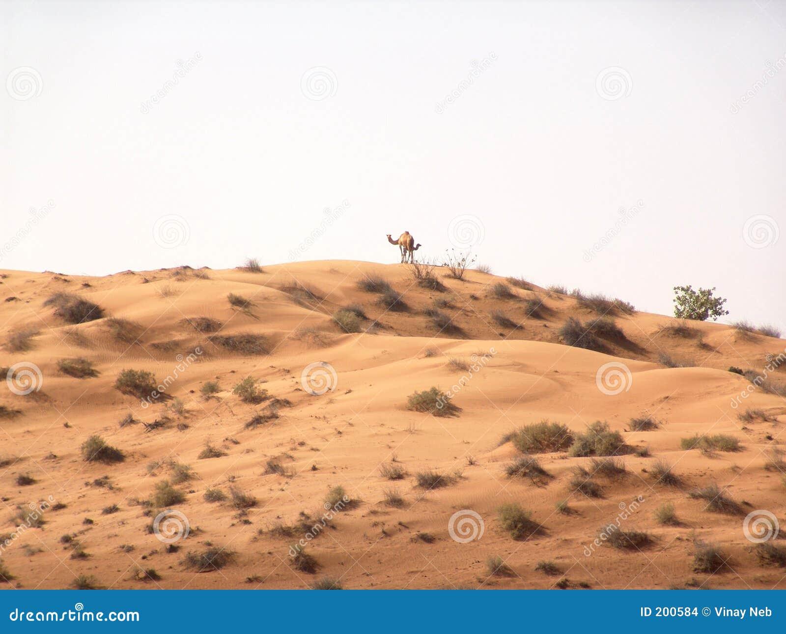 Download Paesaggio del deserto fotografia stock. Immagine di sabbia - 200584