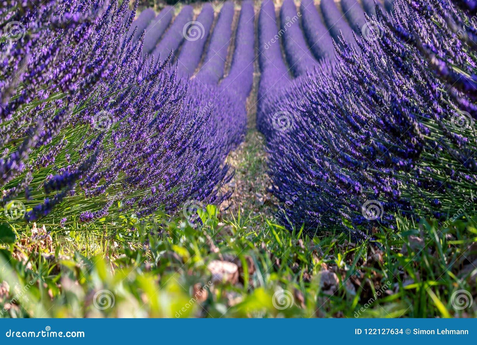 Paesaggio del francese - Drome