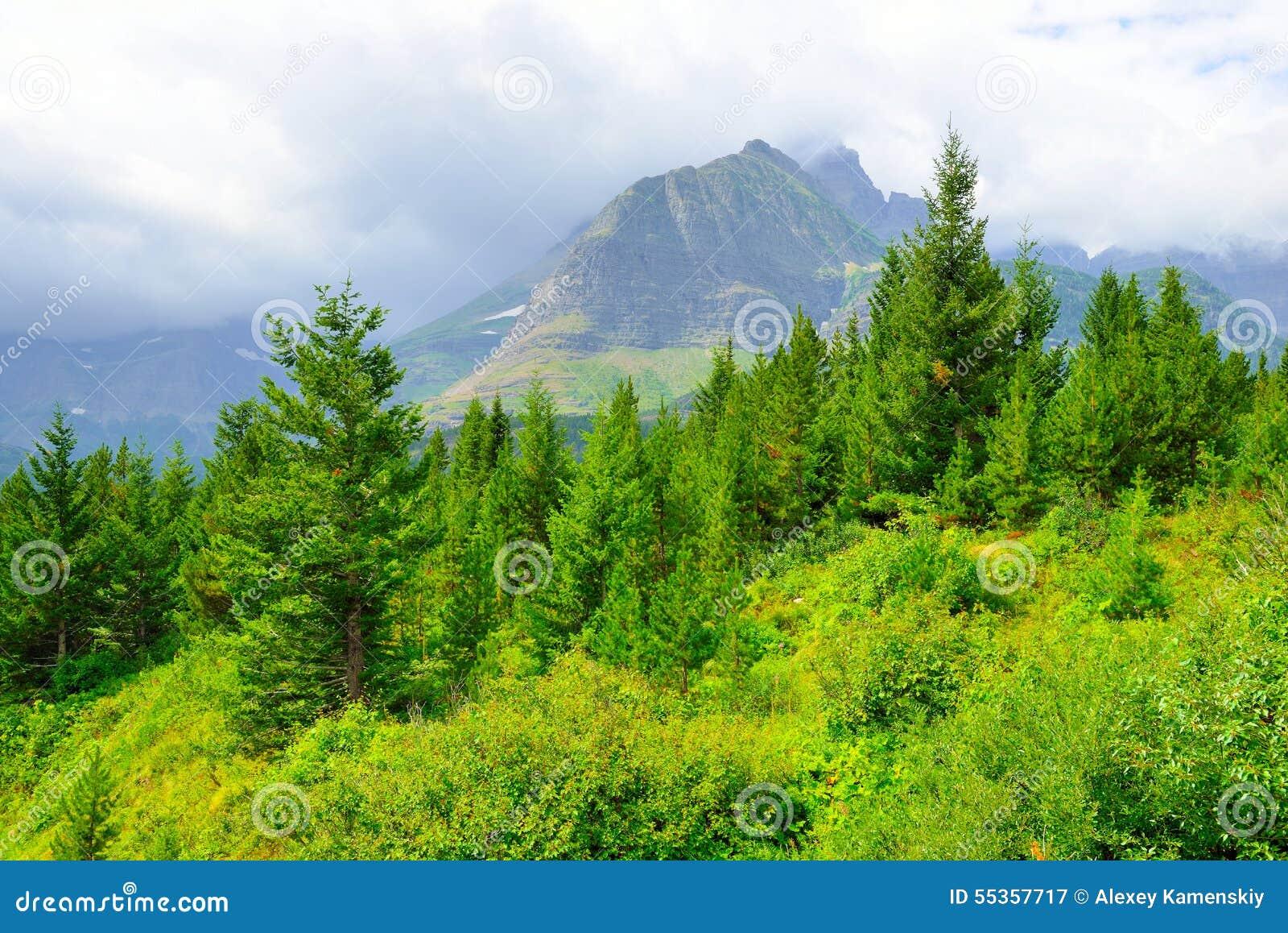 Paesaggio del Glacier National Park