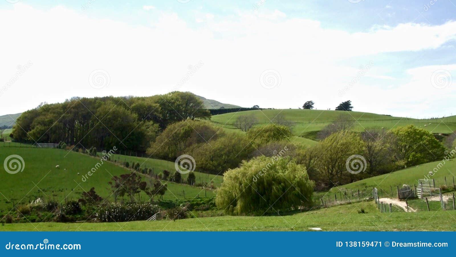 Paesaggio dell azienda agricola un giorno di estate in Otago
