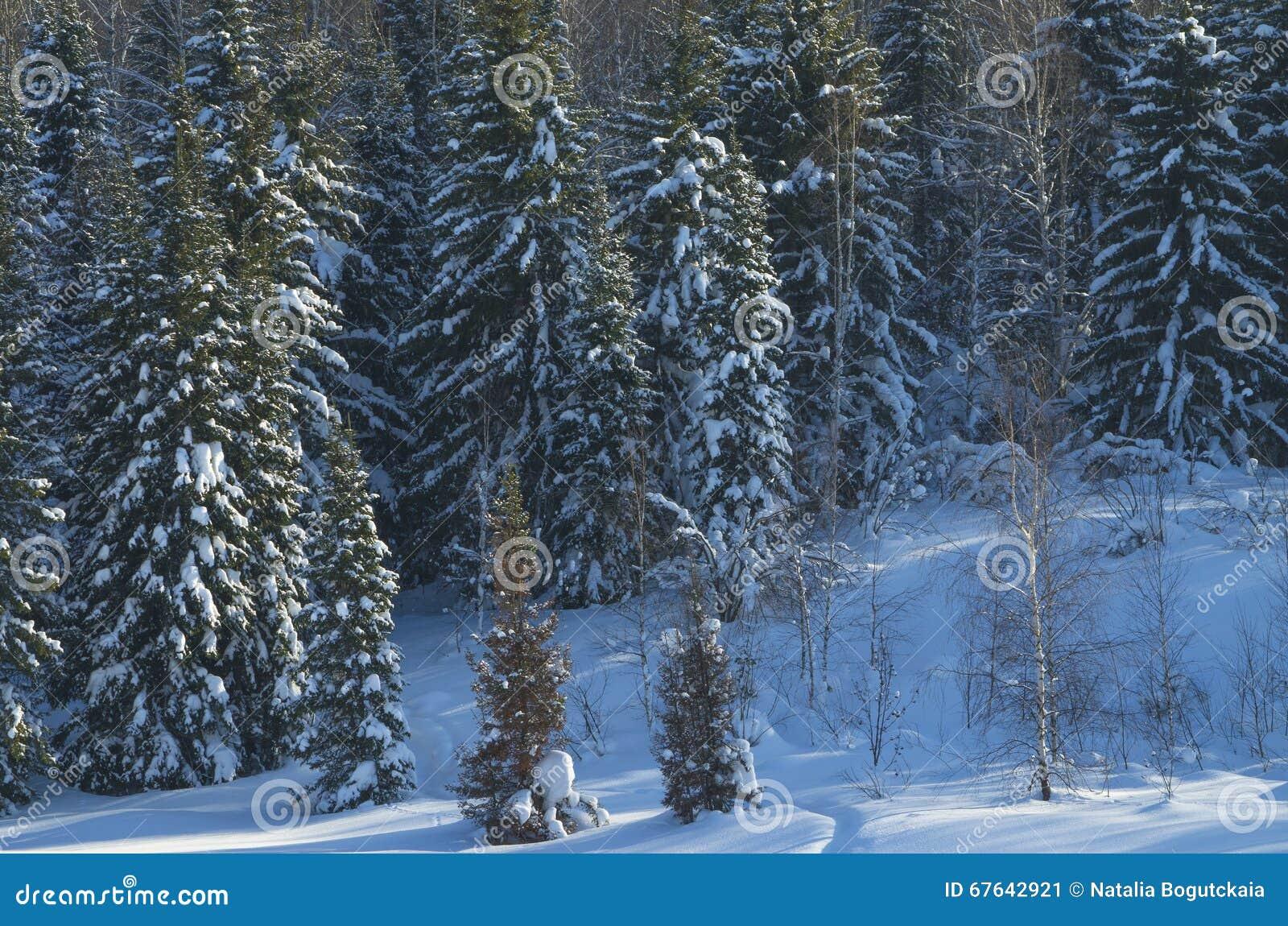 Paesaggio dell inverno nel legno