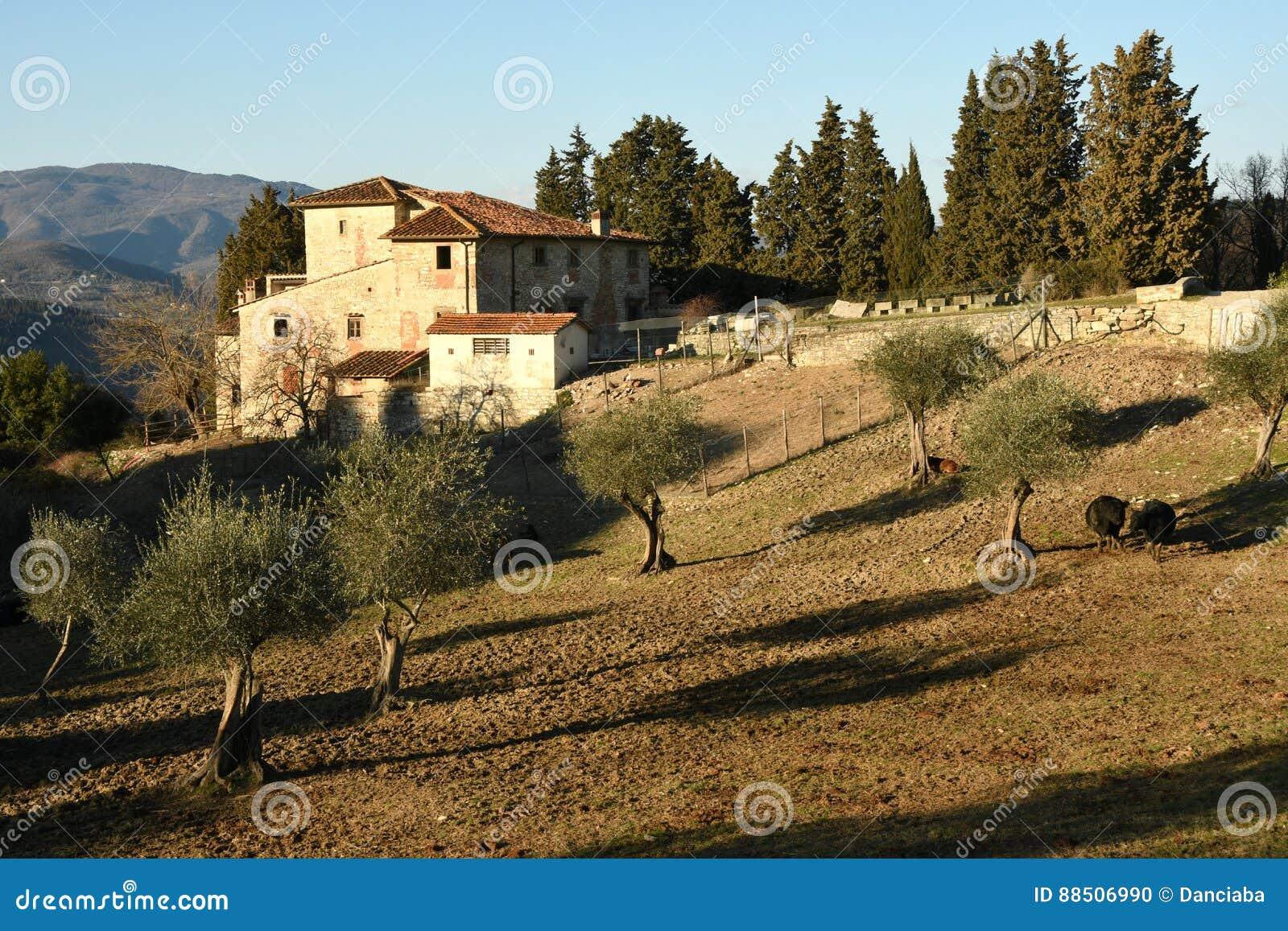 Paesaggio della campagna toscana casa tipica dell 39 azienda for Casa della piastrella firenze