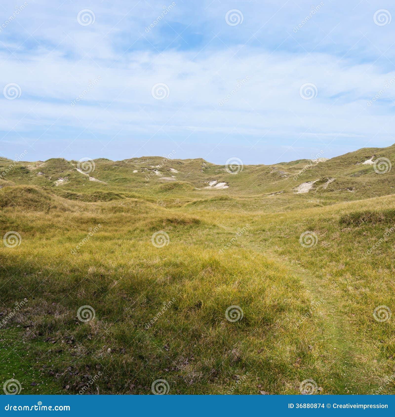 Download Paesaggio della duna fotografia stock. Immagine di salute - 36880874