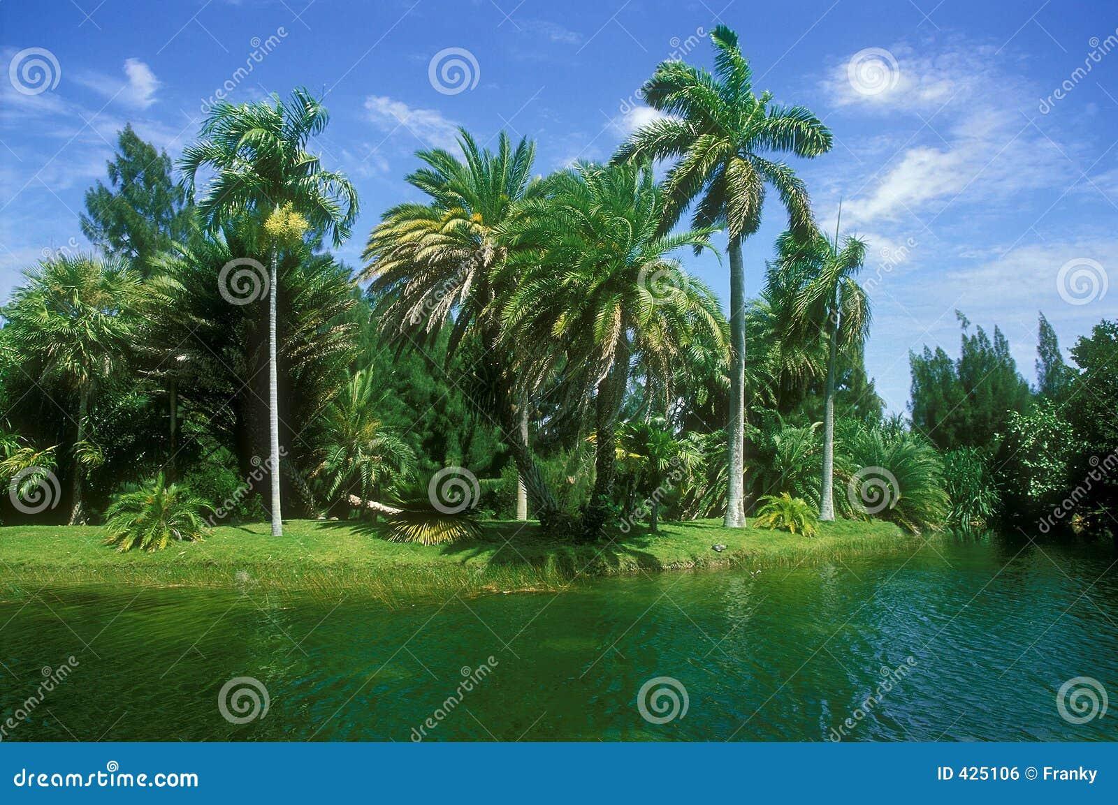 Paesaggio della Florida