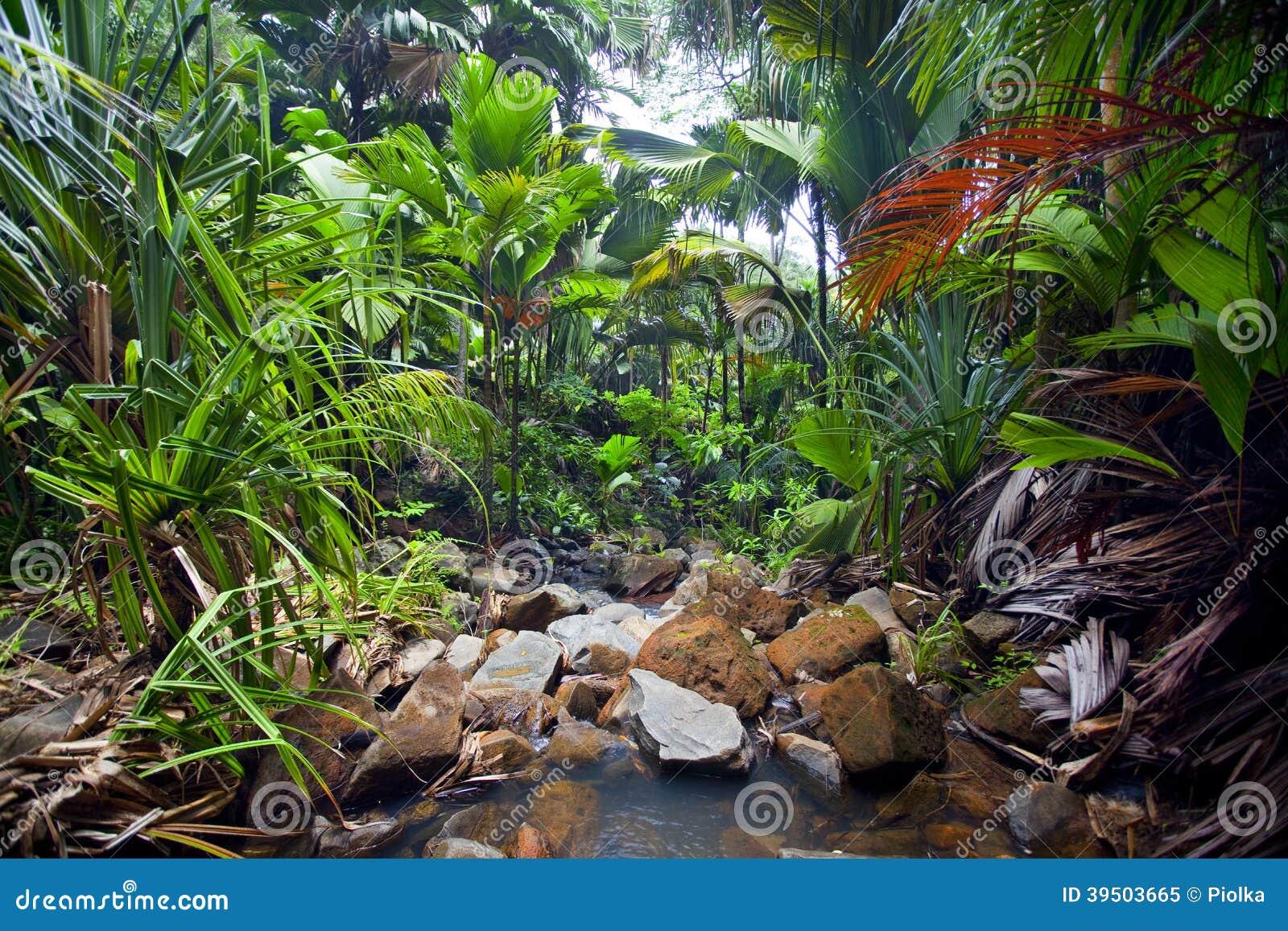 Paesaggio della giungla con insenatura
