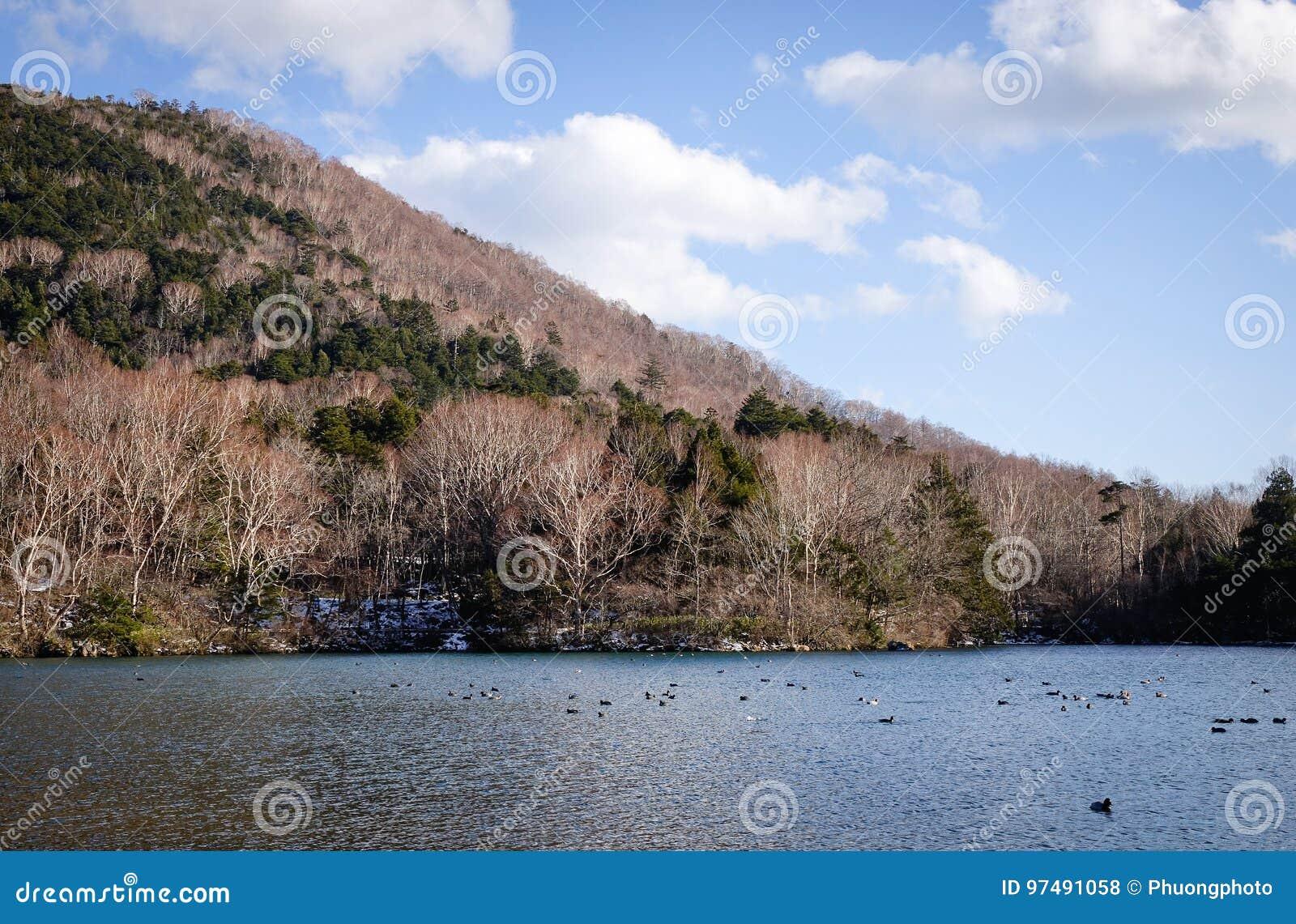 Paesaggio della montagna a Nikko, Giappone