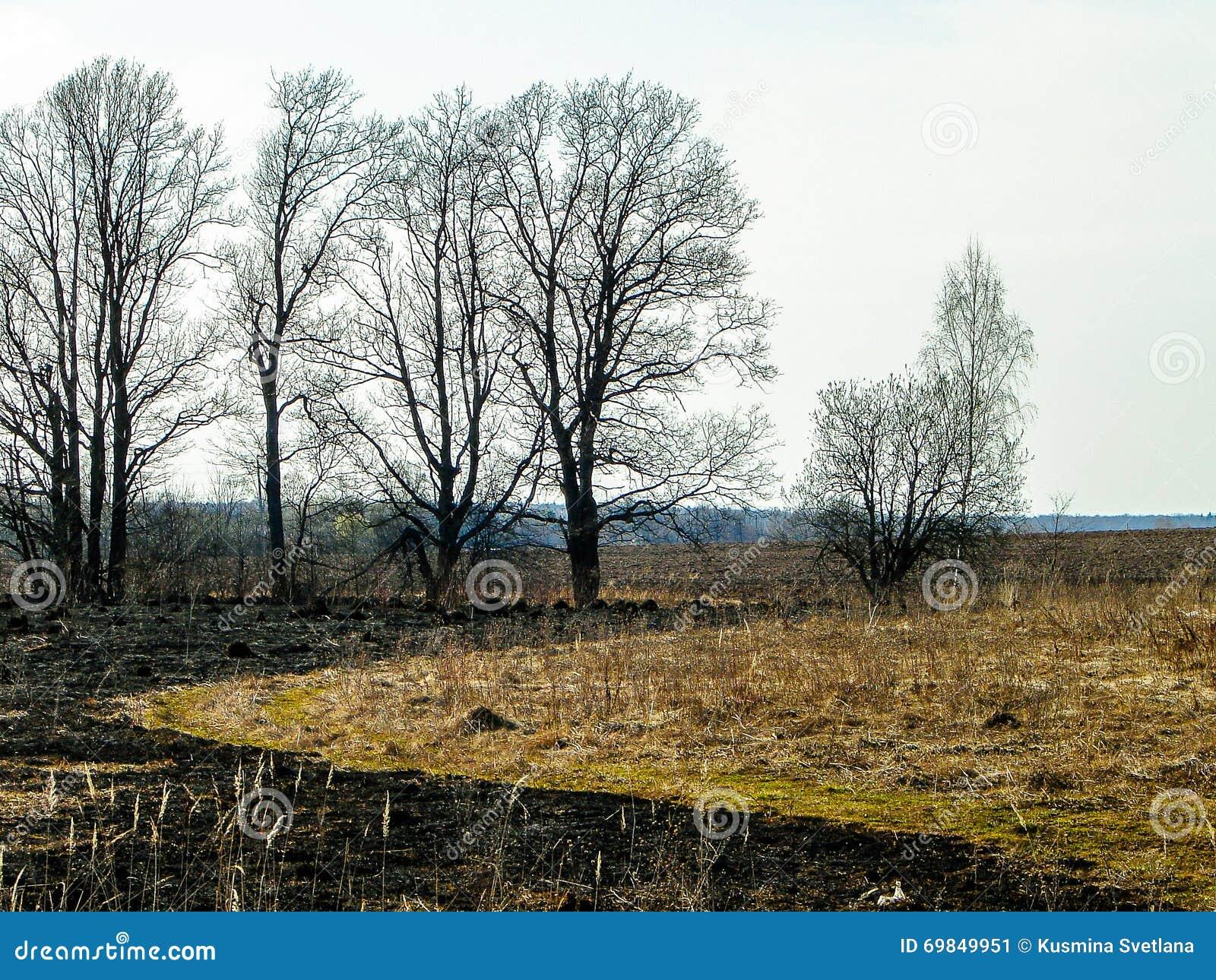 Paesaggio della primavera nella regione di Kaluga (Russia)