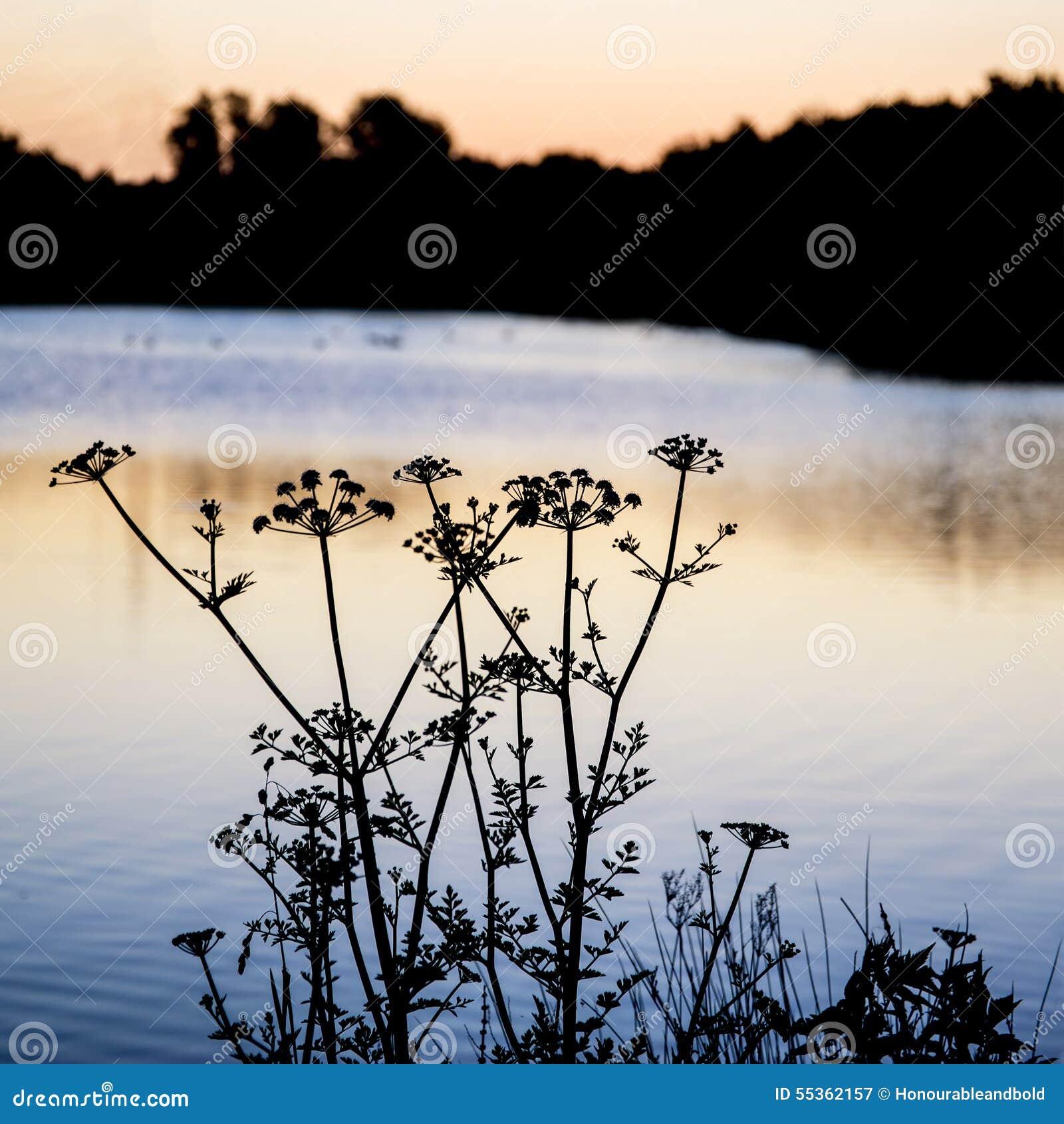 Paesaggio della siluetta di alba di fogliame sul lago ad alba di alba