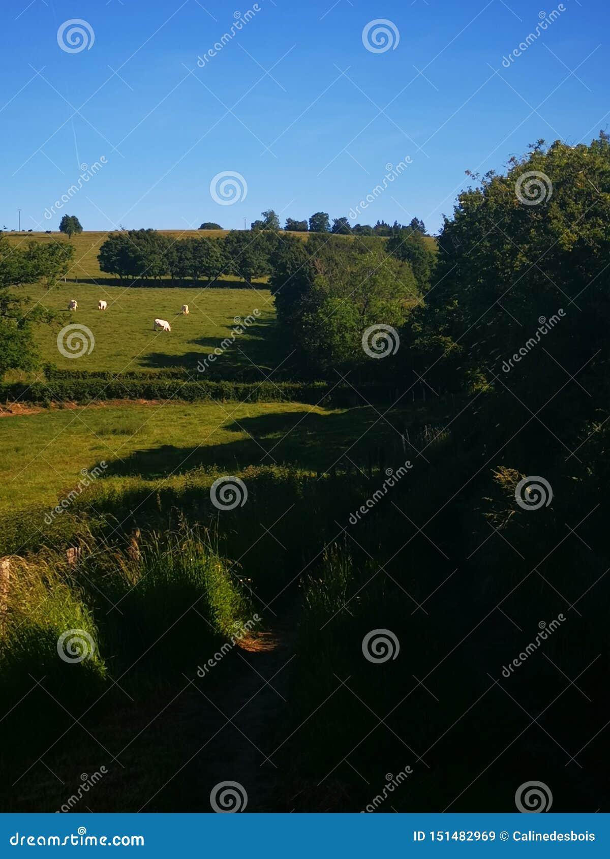 Paesaggio di alcuni campi e mucca nella Borgogna Francia
