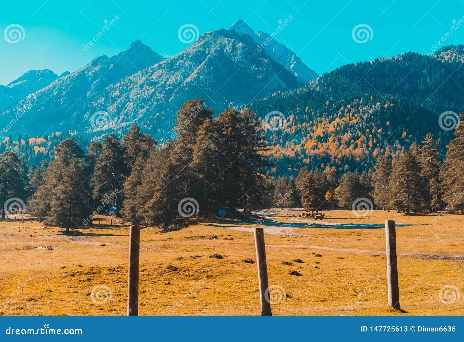 Paesaggio di autunno, alberi sui precedenti delle montagne, montagne, natura