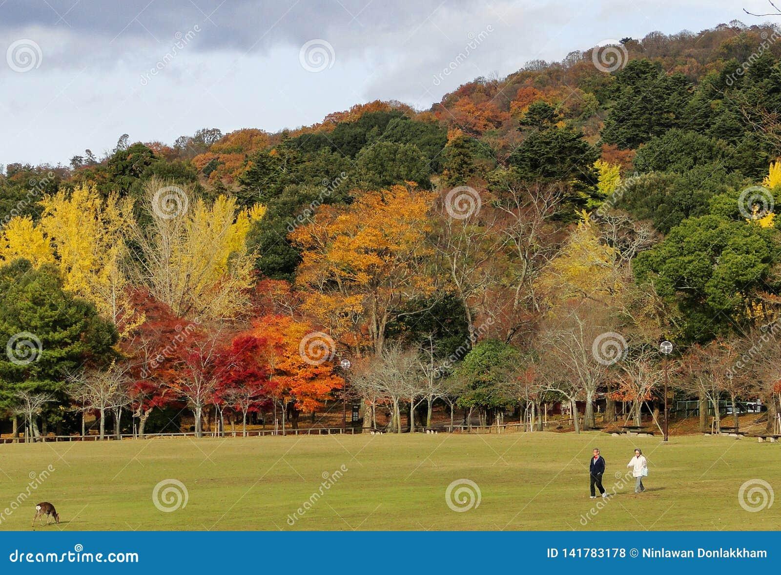 Paesaggio di autunno di Kyoto, Giappone