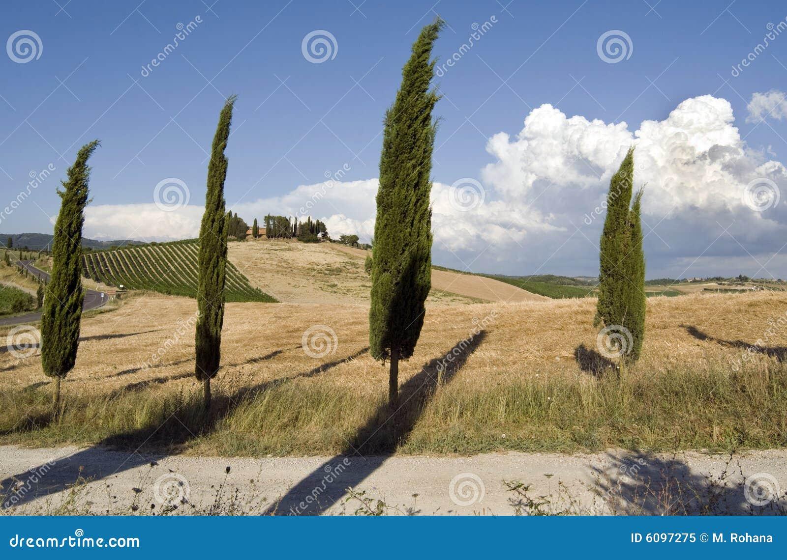 Paesaggio di Chianti