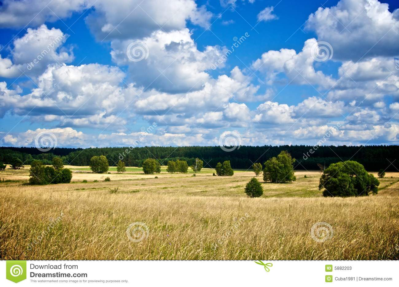 Paesaggio di estate
