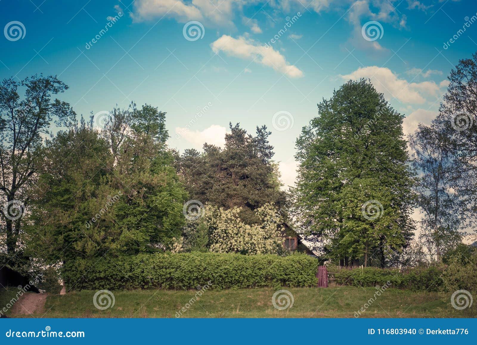 Paesaggio di estate con gli alberi, il recinto vivente, la parte di una casa di legno ed il portone tonalità