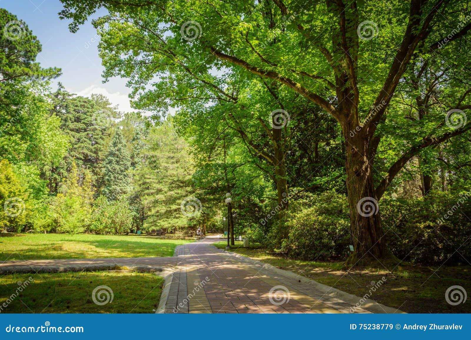 Paesaggio di estate in giardino tropicale arboreto di soci - Giardino tropicale ...