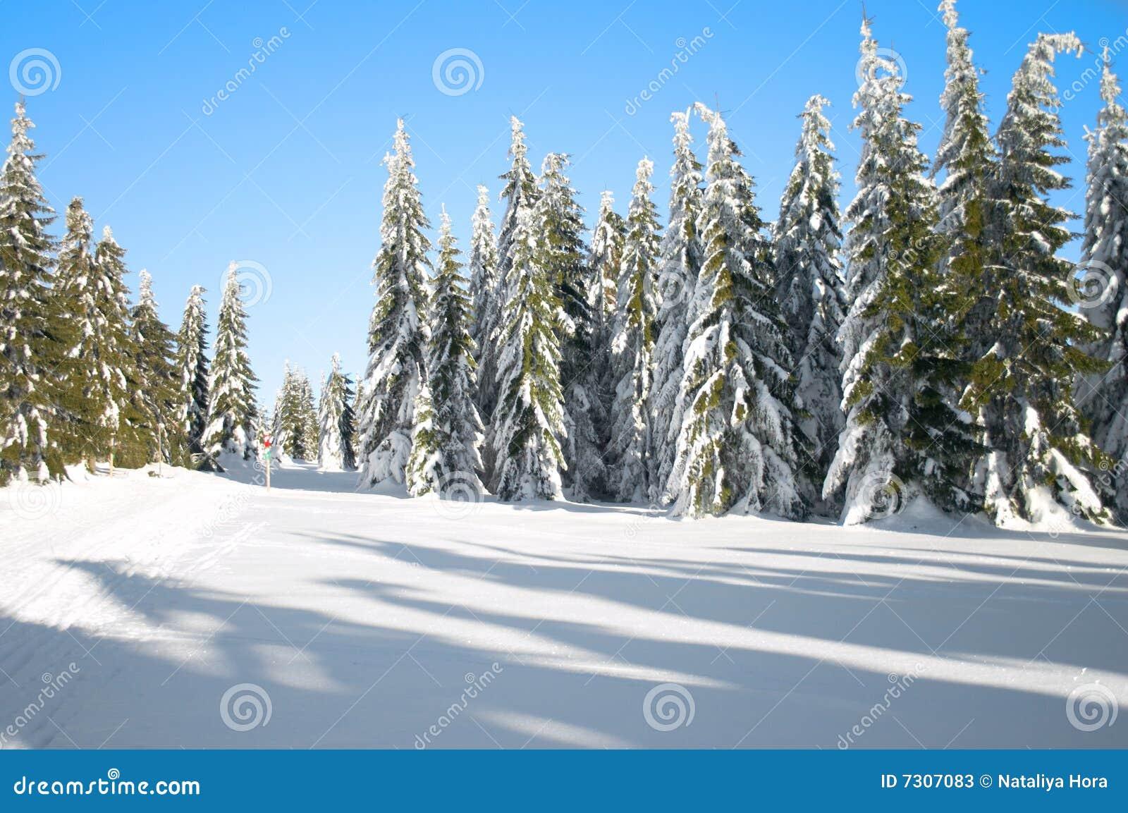 Paesaggio di inverno