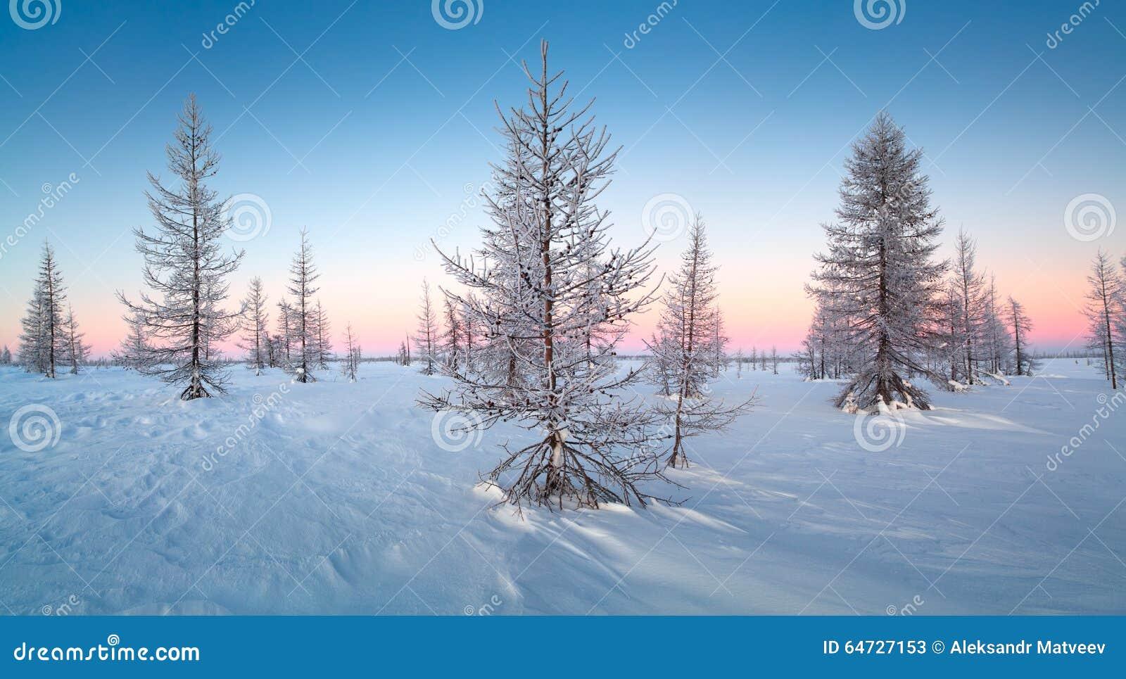 Paesaggio di inverno con gli alberi innevati