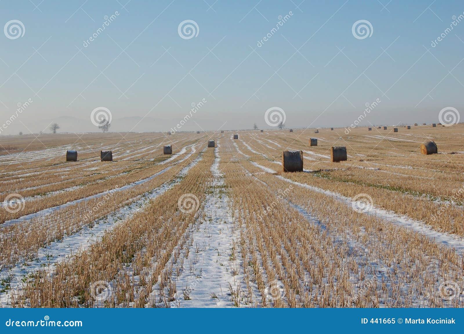 Paesaggio di inverno con i gruppi