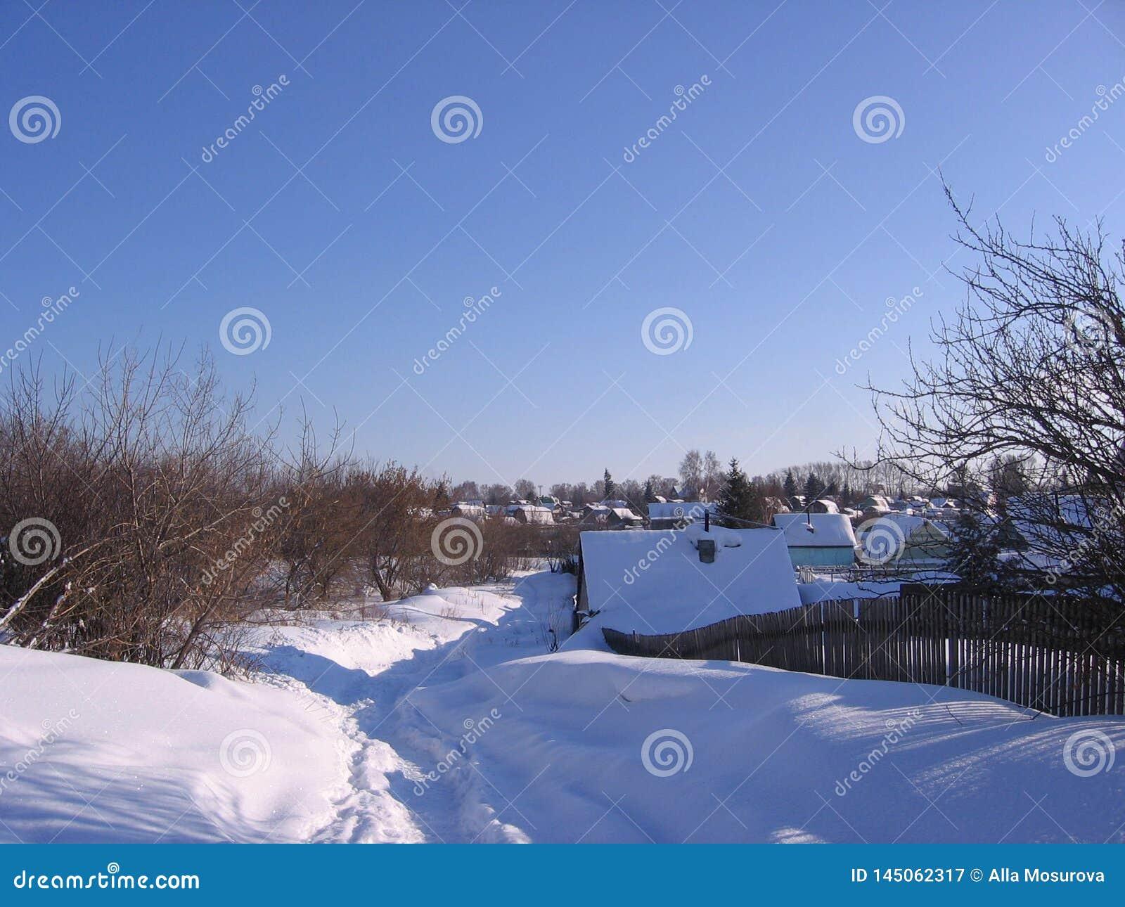Paesaggio di inverno del villaggio russo nel percorso neve-calpestato attraverso le derive un chiaro giorno soleggiato in natura