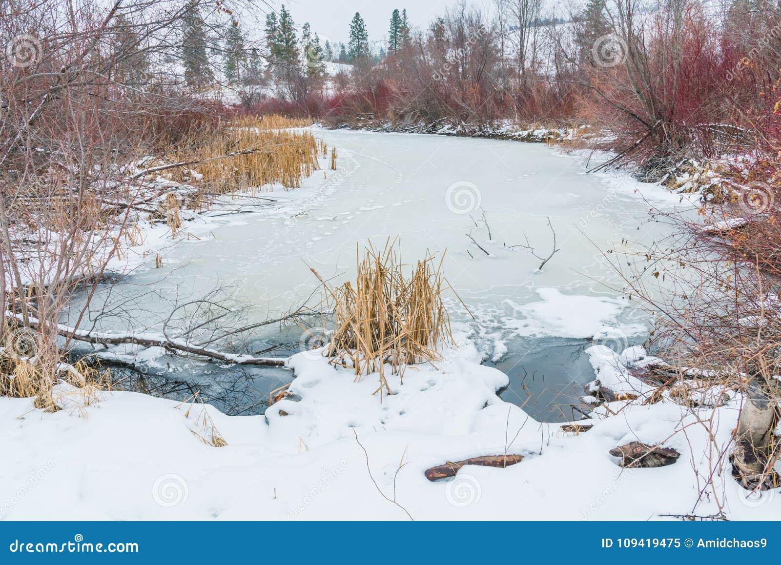 Paesaggio di inverno della palude congelata con le canne ed i salici