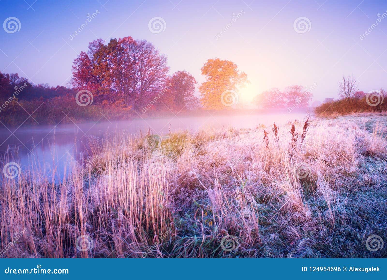 Paesaggio di novembre Mattina di autunno con gli alberi variopinti e brina sulla terra