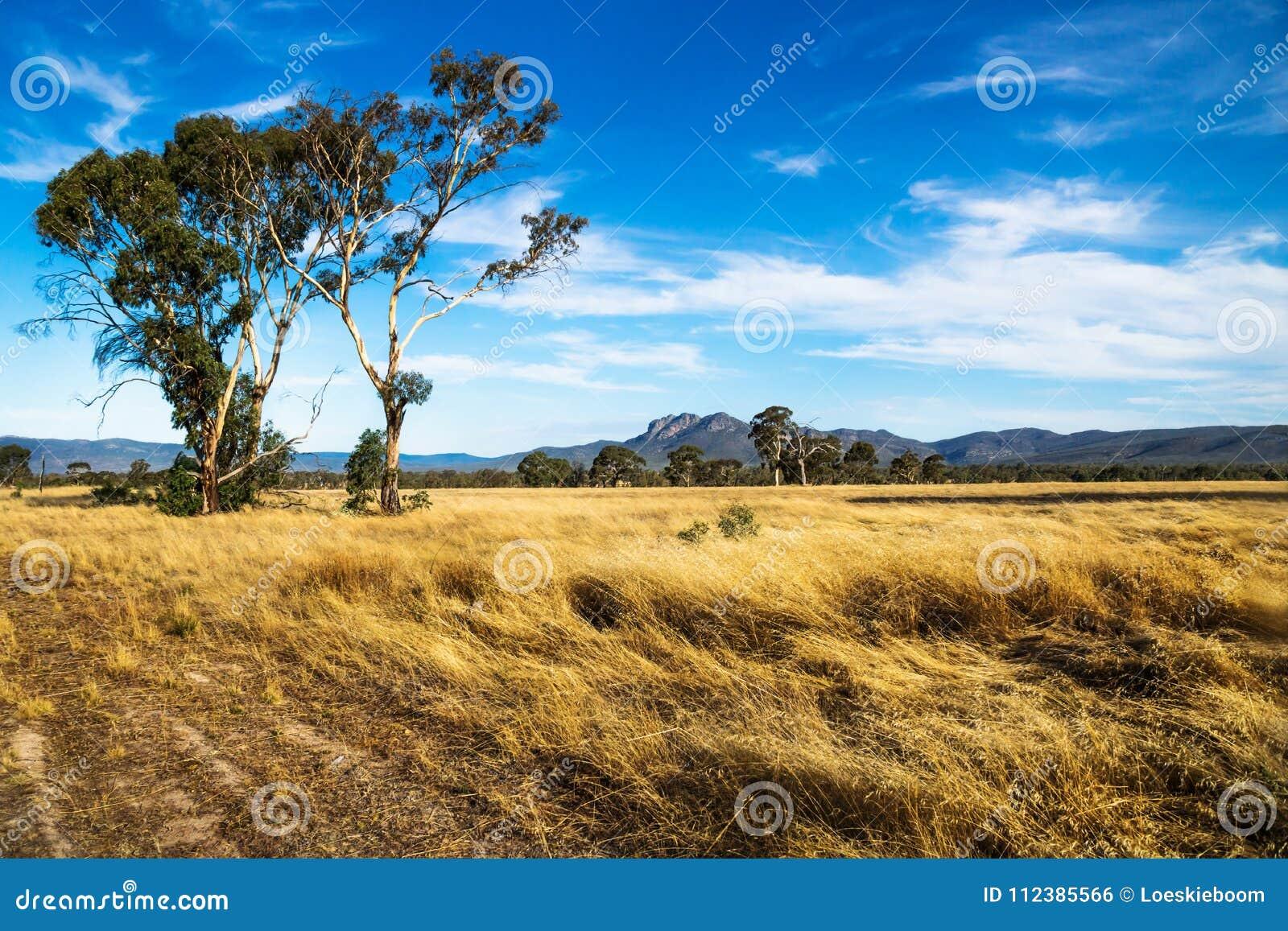 Paesaggio dorato del pascolo nel cespuglio con le montagne di Grampians nei precedenti, Victoria, Australia
