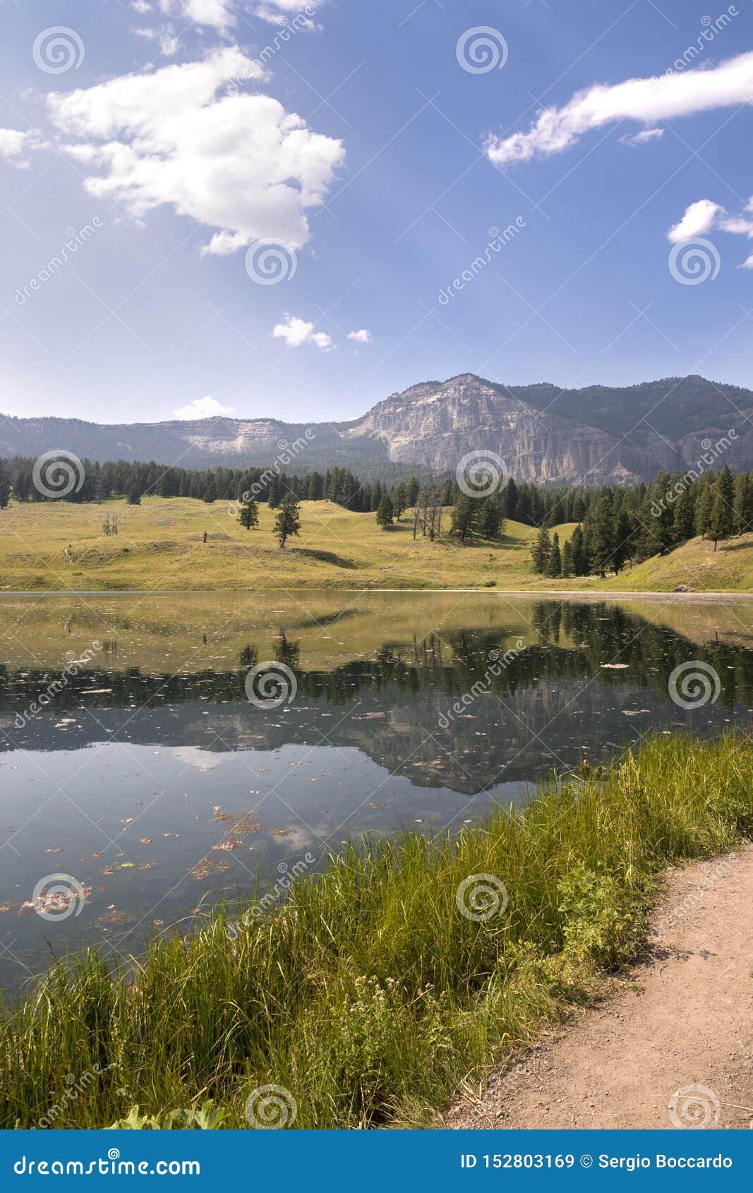 Paesaggio Ed Alberi Nel Lago Trout In Lamar Valley Nel Parco ...