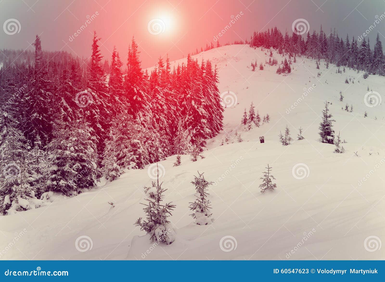 Paesaggio fantastico che emette luce dalla luce solare Inverno con il paesaggio del ` s del nuovo anno dell abetaia Neve fresca s