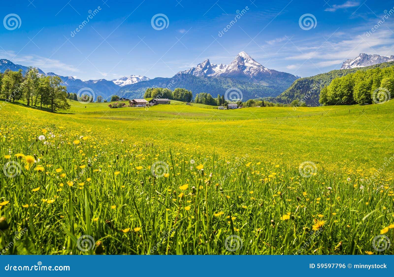 Paesaggio idilliaco nelle alpi con i prati ed i fiori for Fiori verdi