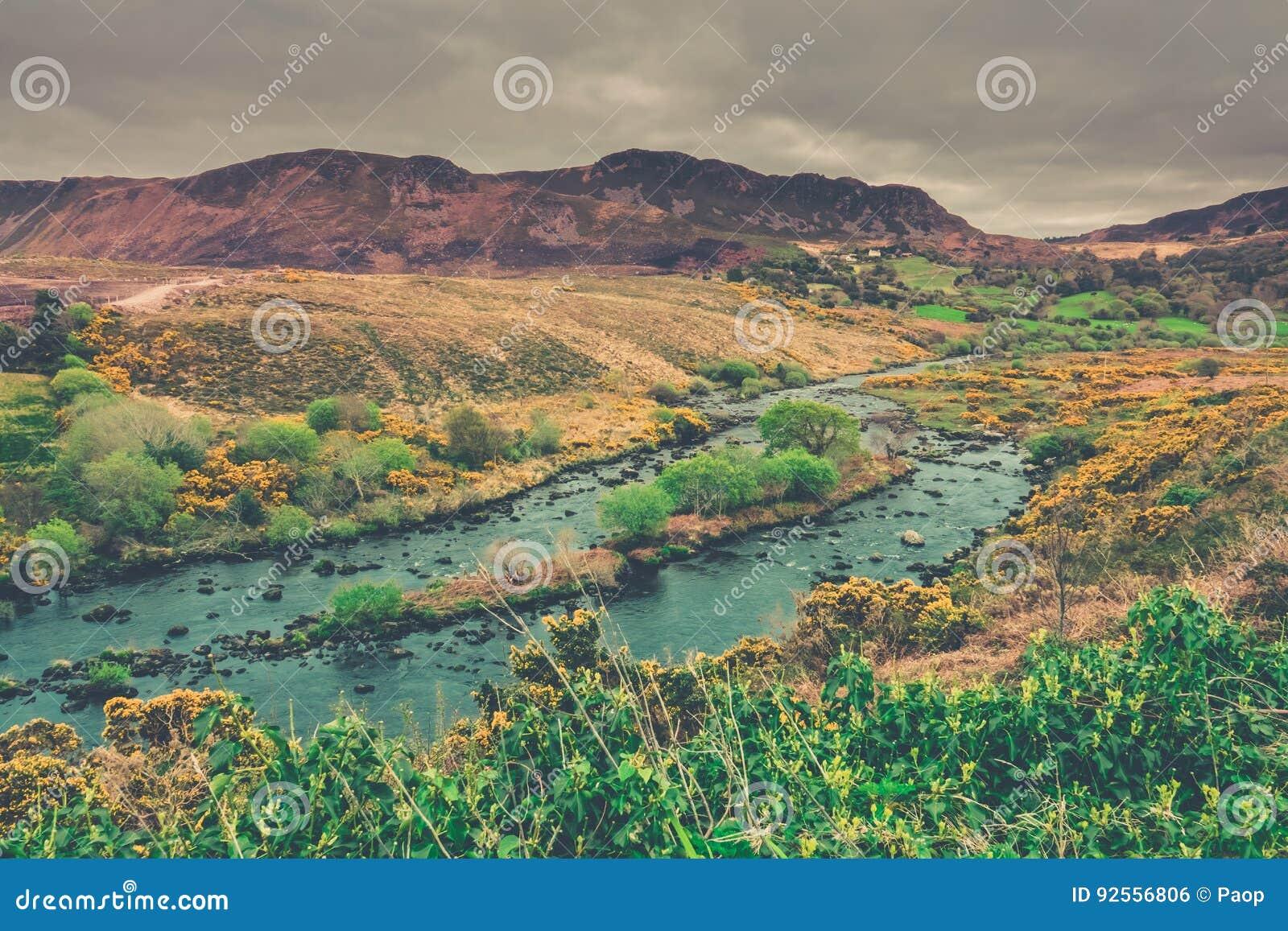 Paesaggio irlandese verde