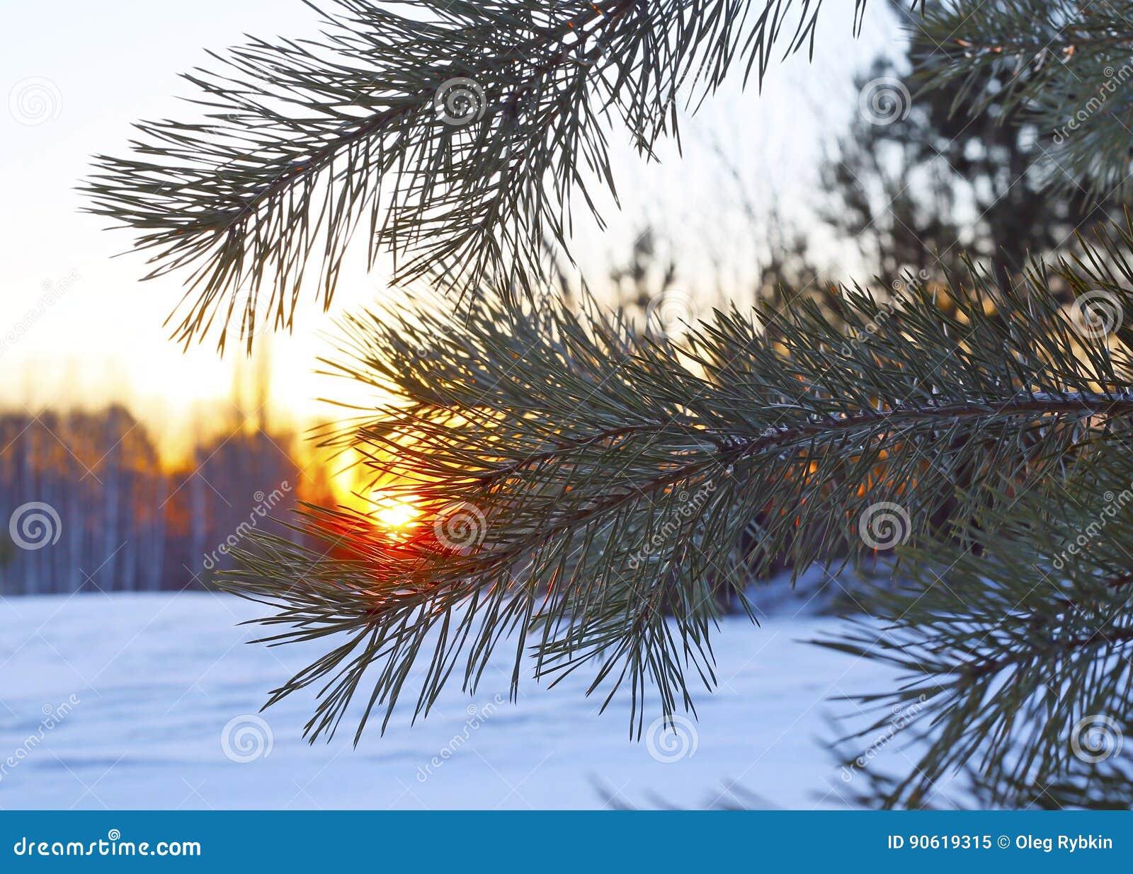 Paesaggio maestoso di inverno che emette luce dalla luce solare di mattina