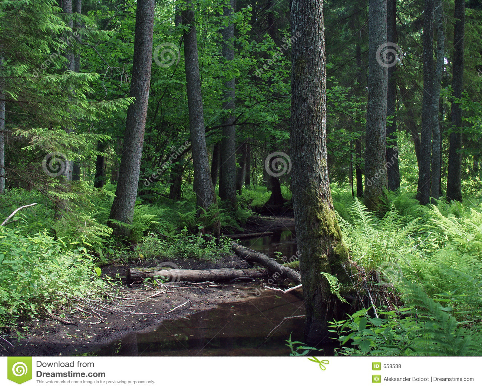 Paesaggio naturale della foresta
