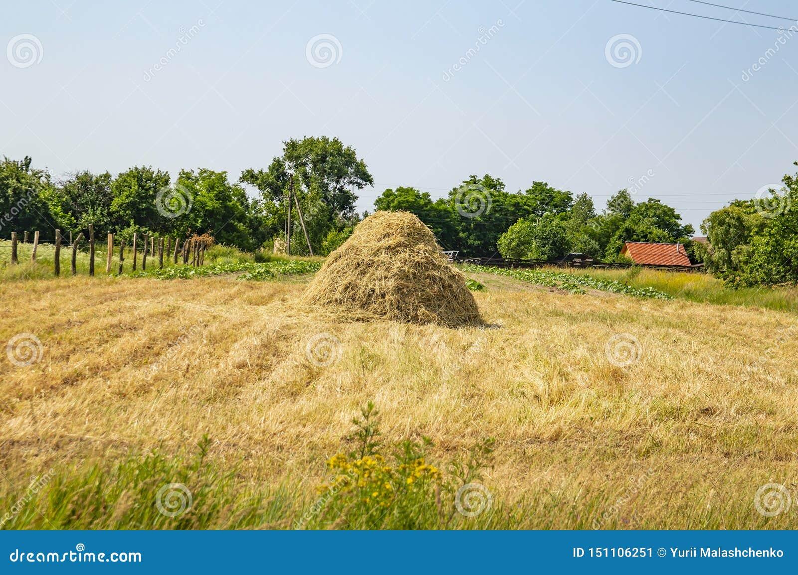 Paesaggio naturale - fieno sul campo